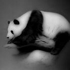 Panda by CarolM