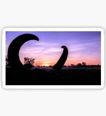 Curious Sunrise - Northern Territory Sticker