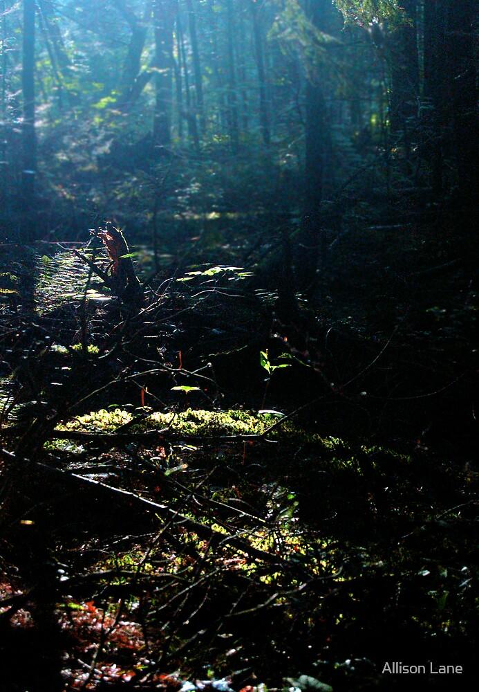 Forest Sunrise by Allison Lane