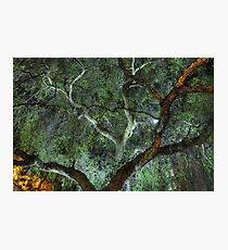 Moonlit Willow Photographic Print