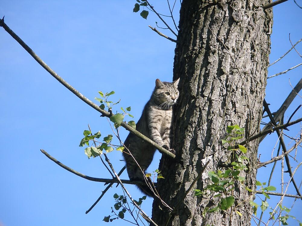 cat on tree by kveta
