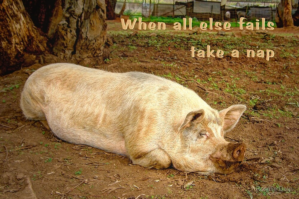 When all else fails ... by Rosalie Dale