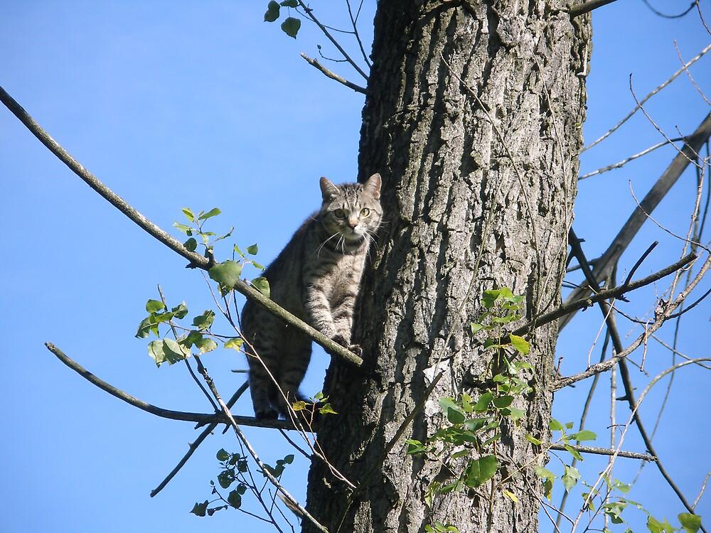 cat on tree 1 by kveta