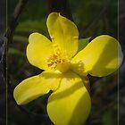 Little yellow  bushflower  Dasiphora fruticosa by Alexey Dubrovin