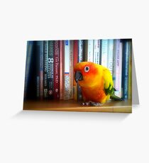 You've Got To Be Kidding Me! A Book By Les Parrott - Sun Conure - NZ Greeting Card