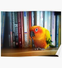 You've Got To Be Kidding Me! A Book By Les Parrott - Sun Conure - NZ Poster