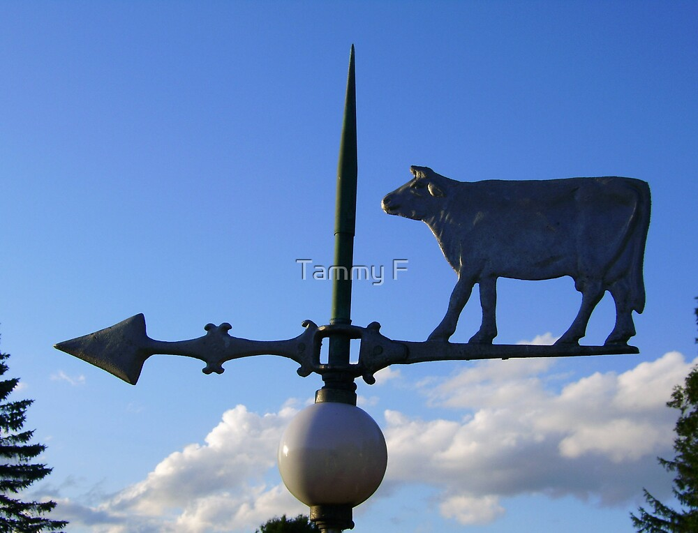 Pointing Cow by Tammy F