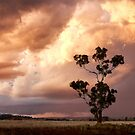 Sunset gum by David Haworth