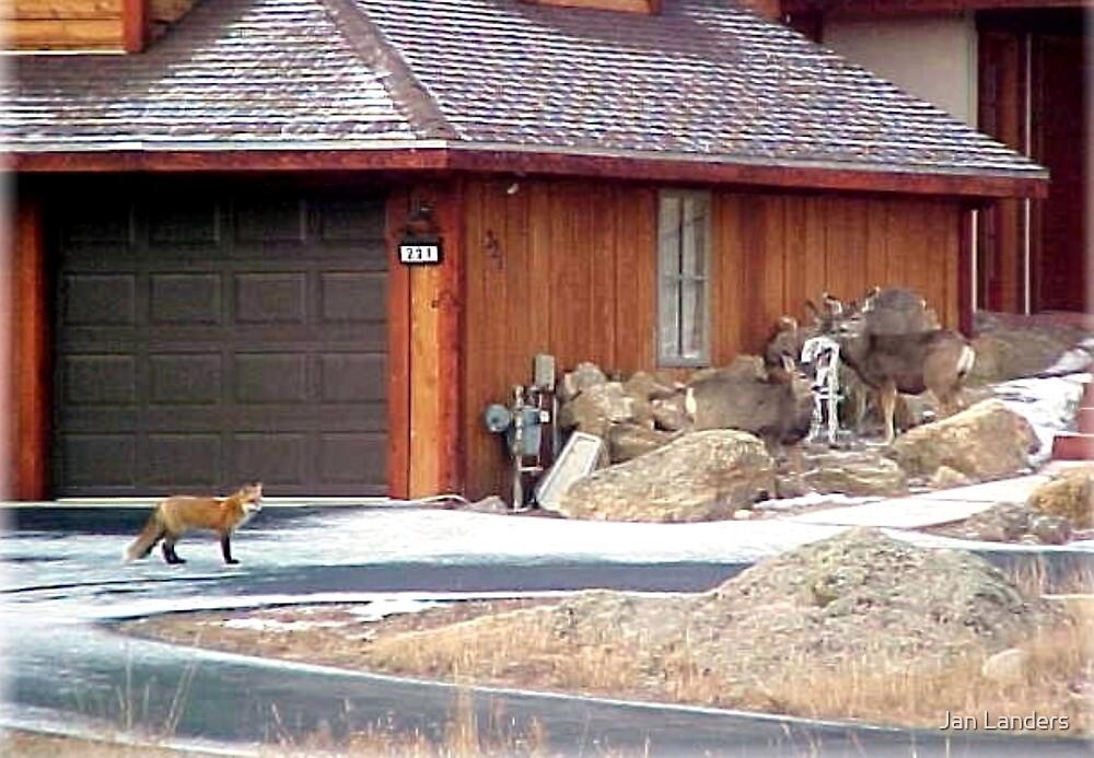 Our Wild Neighbors by Jan Landers