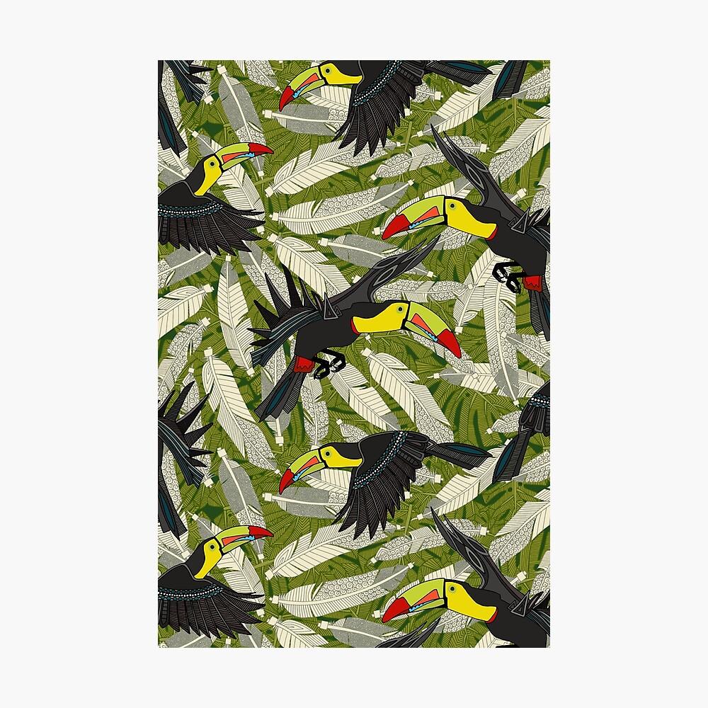 toucan jungle Photographic Print