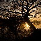 Bradford on Avon Silhouette by nakomis