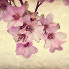 Spring Dream by Christine Lake