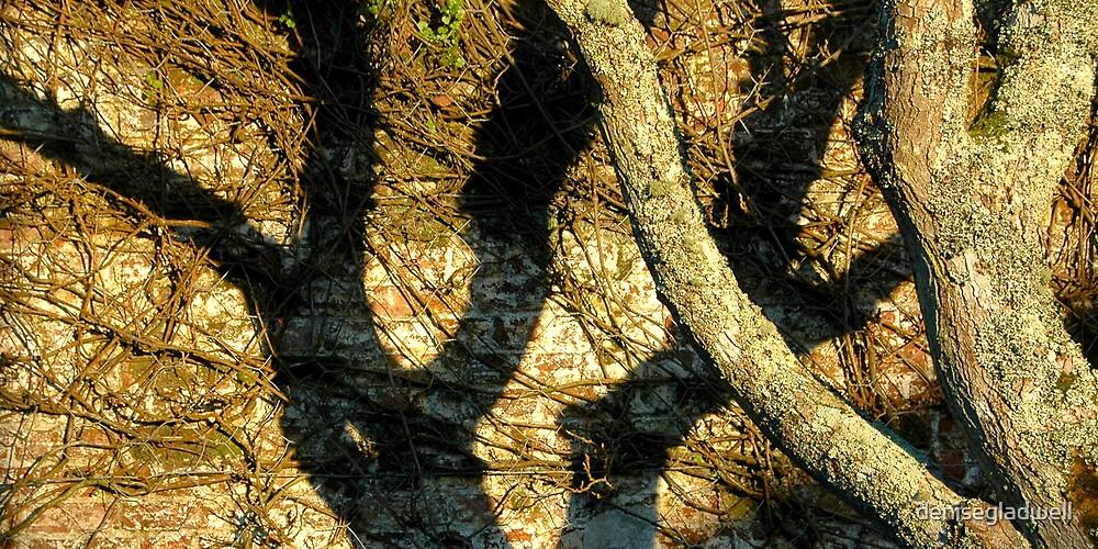 Tree Shadow by denisegladwell