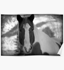 Horse - Spanish Fork, Utah Poster