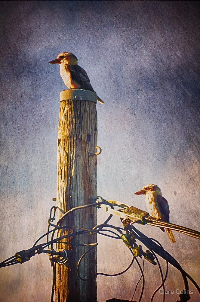 Kookaburras two by Clare Colins