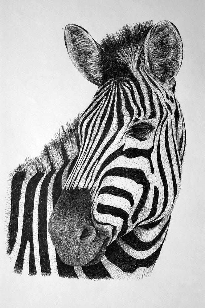 Zebra by RensInk