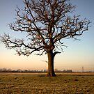 Bradford on Avon, Lone Tree by nakomis