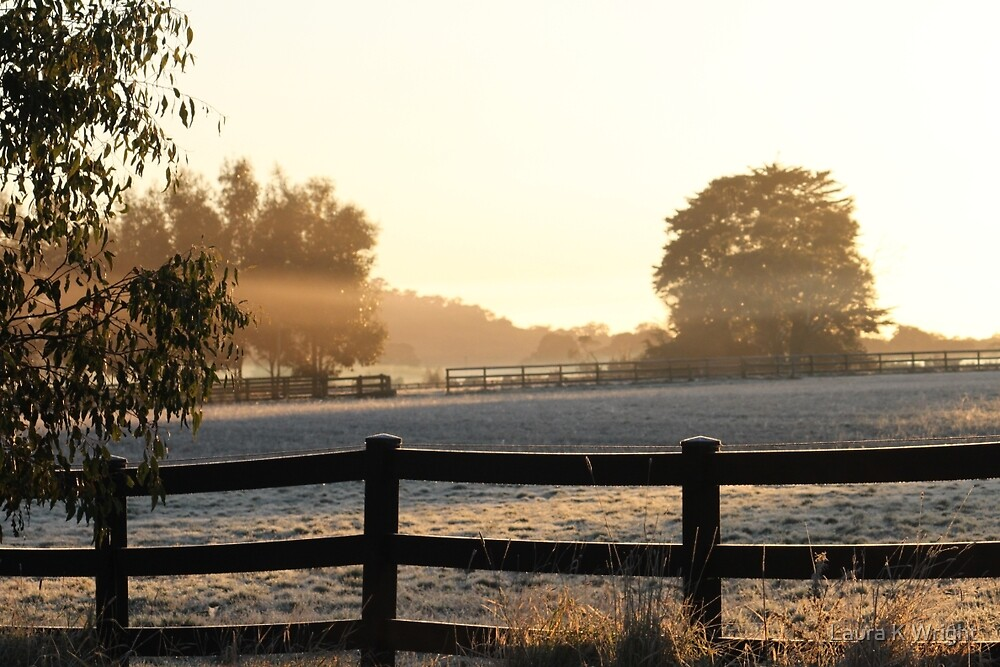 morning sun by Laura K Wright