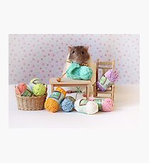 Snoozy wanted to knit ! Photographic Print