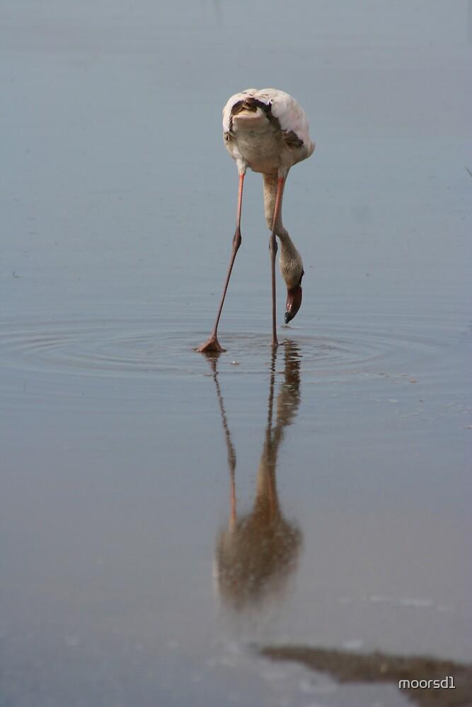 Flamingo, Lake Nakura, Kenya by moorsd1