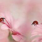 Marienkäfer auf rosa Gerbera von Ellen van Deelen