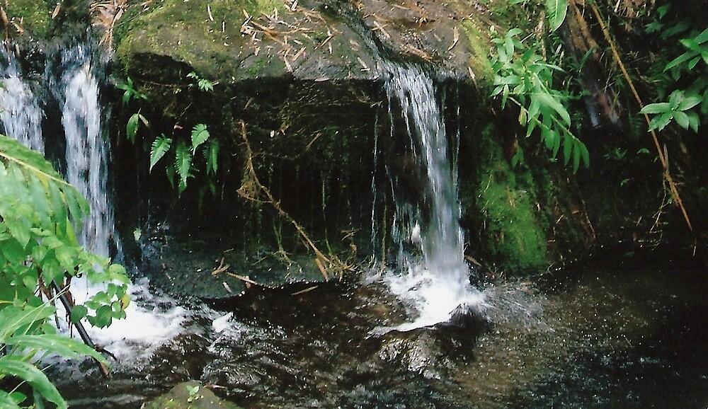Queen's pond by pukaprat