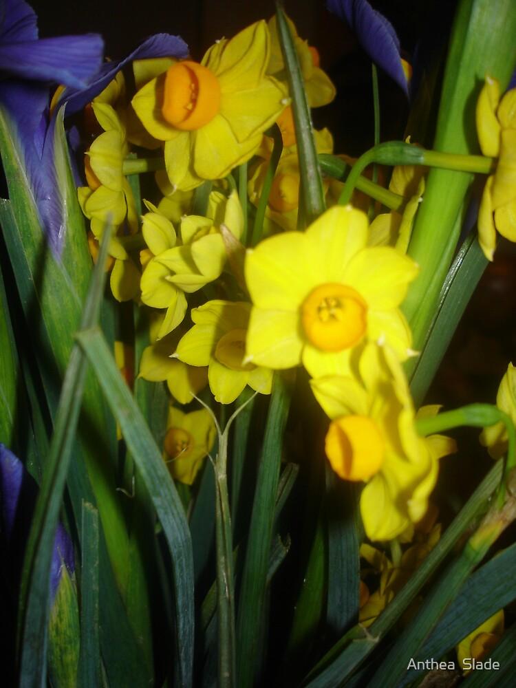 Daffodil Jungle by Anthea  Slade
