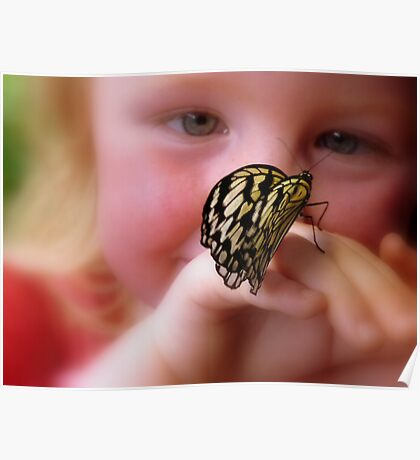 WOW!! A Paper Kite Landed On My Hand! - Paper Kite Butterfly - Dunedin NZ Poster
