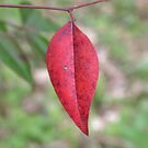 red leaf by Airbrushr  Rick Shores