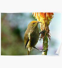 Natural Pollen Highlights! - Bellbird - Southland Poster