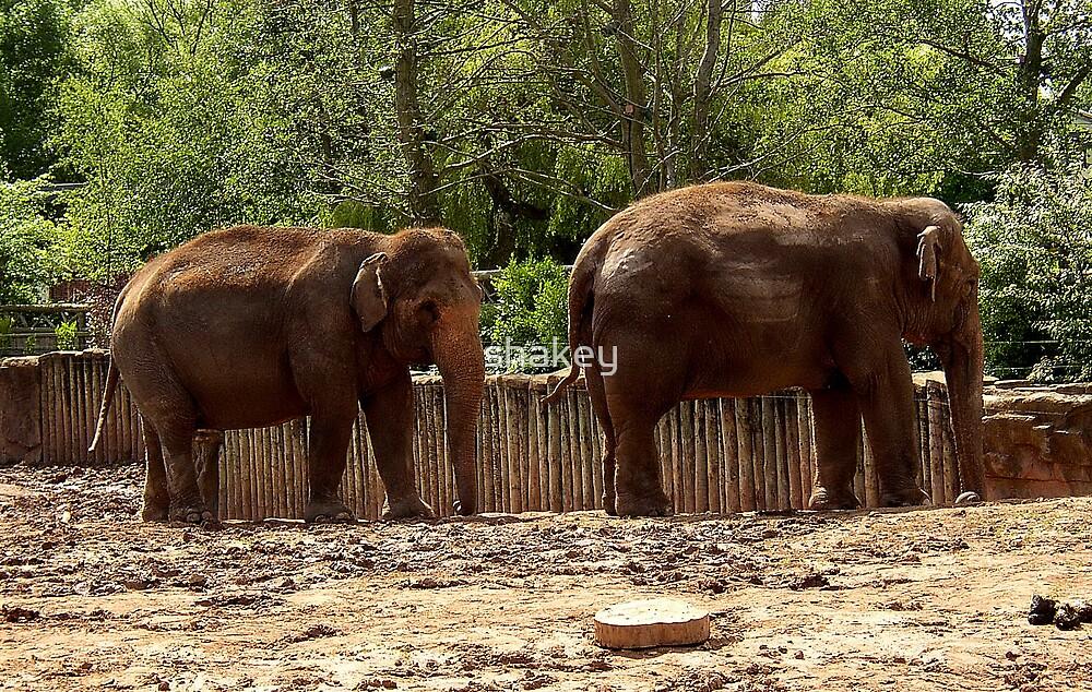 Elephants by shakey