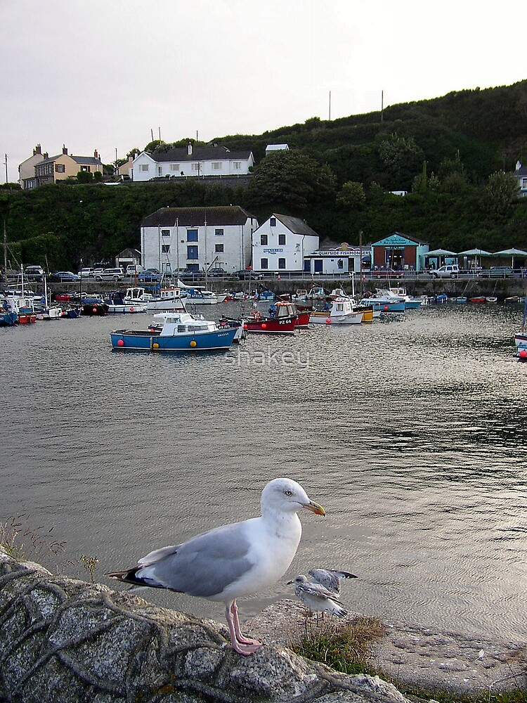 Porthleven Harbour by shakey