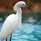 Egret 3 by Anne Smyth