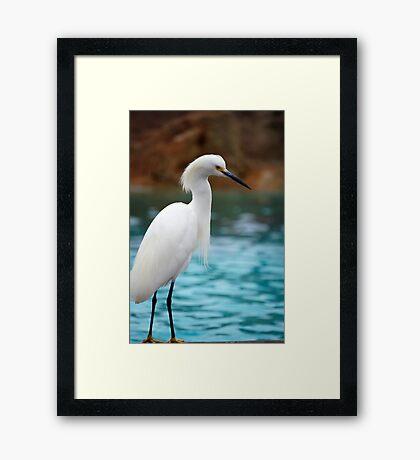 Egret 3 Framed Print