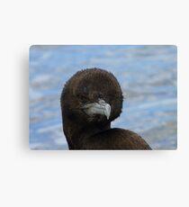 Rare Opportunity Touching NZ Wild Bird- Cormorant/Shag - NZ Canvas Print