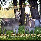 Happy Bithday donkeys by Tiana  McVay