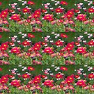 Meadow in May by woolcos