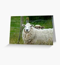 Stop Reading Over My Shoulder! - Sheep NZ Greeting Card