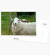 Stop Reading Over My Shoulder! - Sheep NZ Postcards