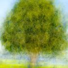 Tree In The Park by joseph s  giacalone