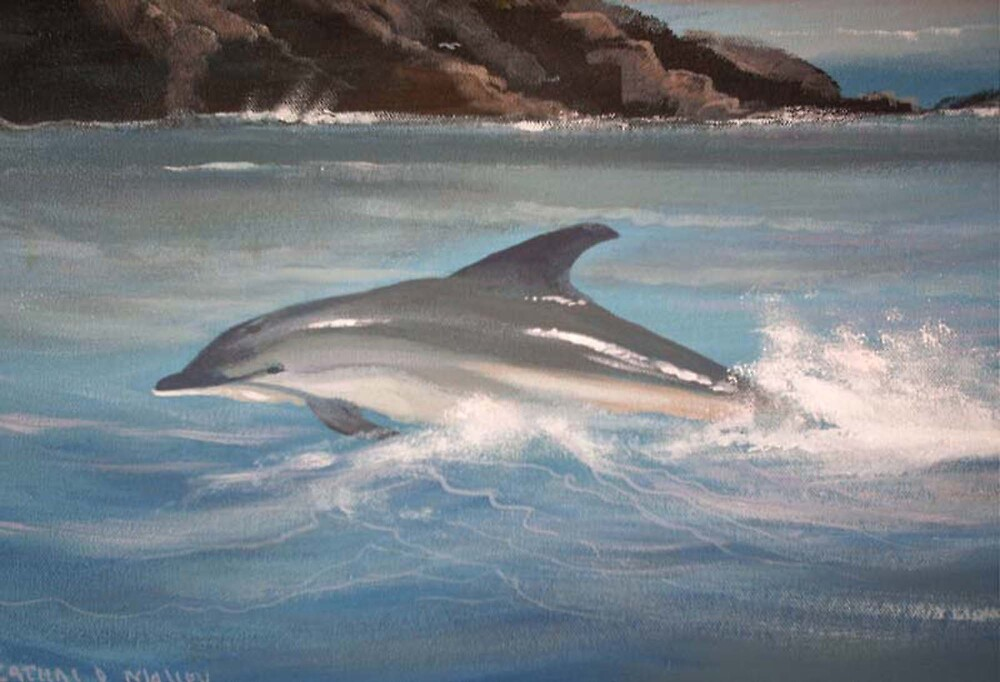 dolphin fun by cathal  o malley