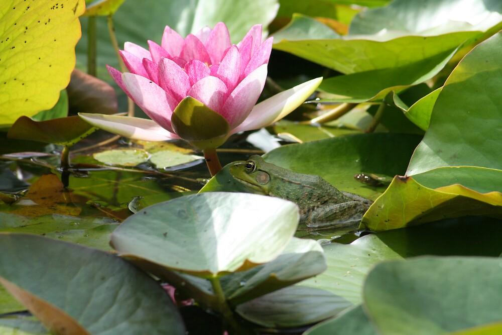 Sunbathing Frog by smobou