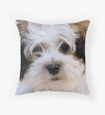 Mojo - shih tzu Bichon - Mossburn Southland Throw Pillow