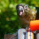 Splish Splash I was Taking A Bath! - Maroon-Bellied Conure - NZ by AndreaEL