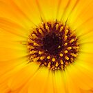 flower macro by Airbrushr  Rick Shores