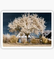 Single blooming cherry tree in infrared view Sticker