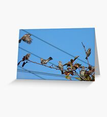 Seven - 7 House Sparrows - Southland NZ Greeting Card