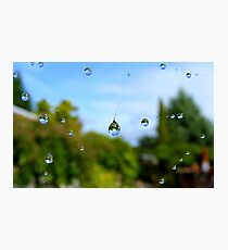 Floating Worlds! - Drops on Webs - NZ Photographic Print