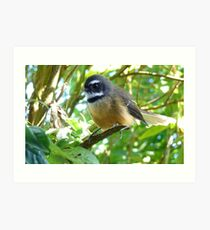 Dressed For Success - Fantail - NZ Art Print