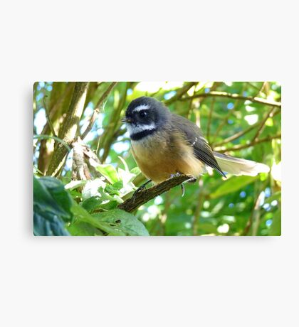 Dressed For Success - Fantail - NZ Canvas Print